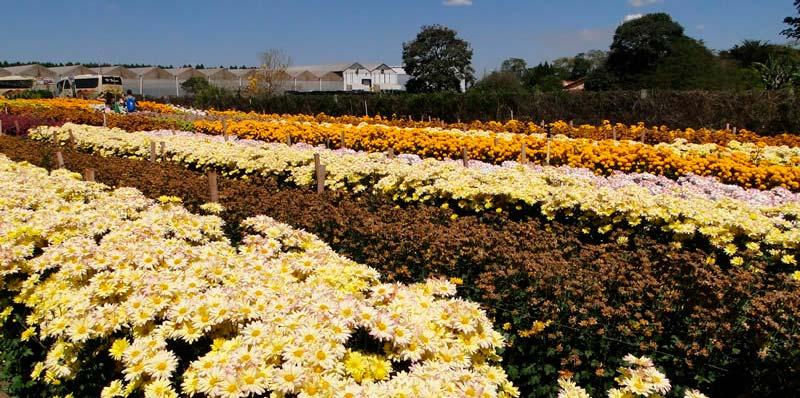 Excursão para Festa das Flores de Holambra e Atibaia SP