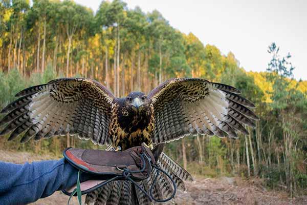 Falcoaria em Monte Verde MG