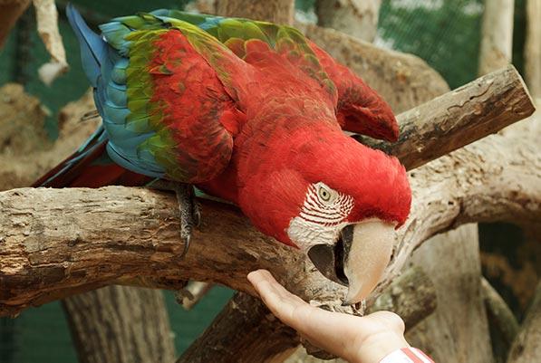 Zoo das Aves de Poços de Caldas