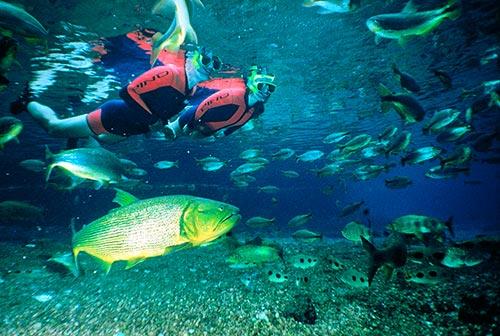 Mergulho no Rio Sucuri, um santuário de águas claras em Bonito MS